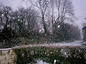 English: Another Snow Flurry - Sandy Grove - L...