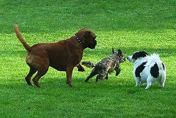 """Dogs doing what they do best. """"You chase ..."""