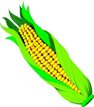 An ear of corn.