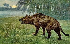Hyaenodon Wikipedia