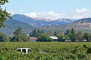 Napa Valley east from Niebaum-Coppola