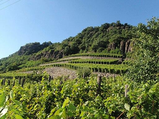 Somló-hegy szőlőültetvény