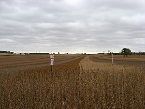Different varieties of soybeans being grown to...