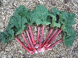 Rheum rhabarbarum leaves and shafts