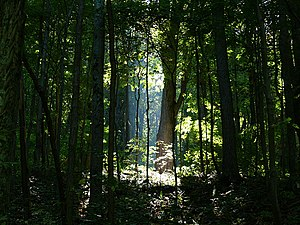 A shaft of sunlight penetrates the dense fores...