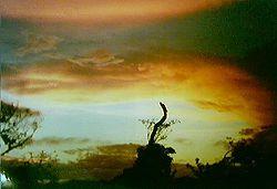 Foto tirada um dia antes da terraplanagem de uma grande área de Mata Atlântica no litoral sul do Estado de São Paulo divisa com Paraná em 1998, para construção de um grande condomínio de luxo.