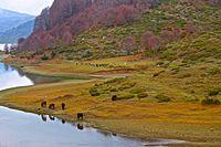 Amos Springs Lake Pindus Horses.jpg
