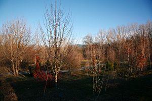Arboreto Giner de los Ríos, Rascafría (Madrid)