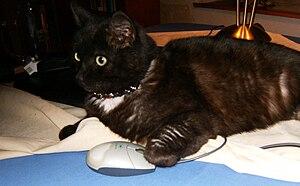 Computer cat.