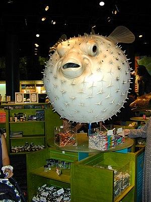 English: Shedd Aquarium, Chicago, Illinois, USA