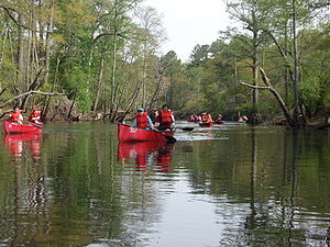 Boy Scouts canoeing on the Blackwater River, V...