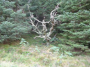 English: Creepy Looking Tree