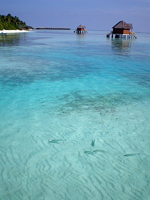 English: Maldives Meeru island