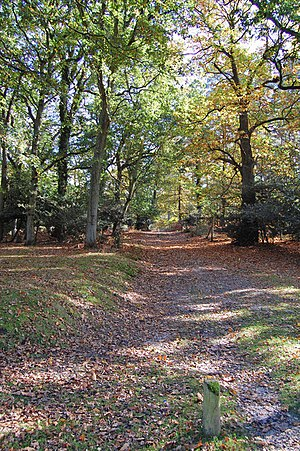 English: Appleslade Bottom, New Forest Nationa...
