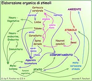 Grafica: Medicina: Fisiologia: Psicologia: Str...