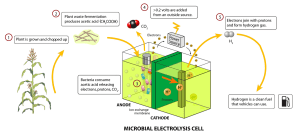 Microbial electrolysis cell  Wikipedia