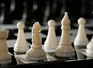 Chess knight 0995