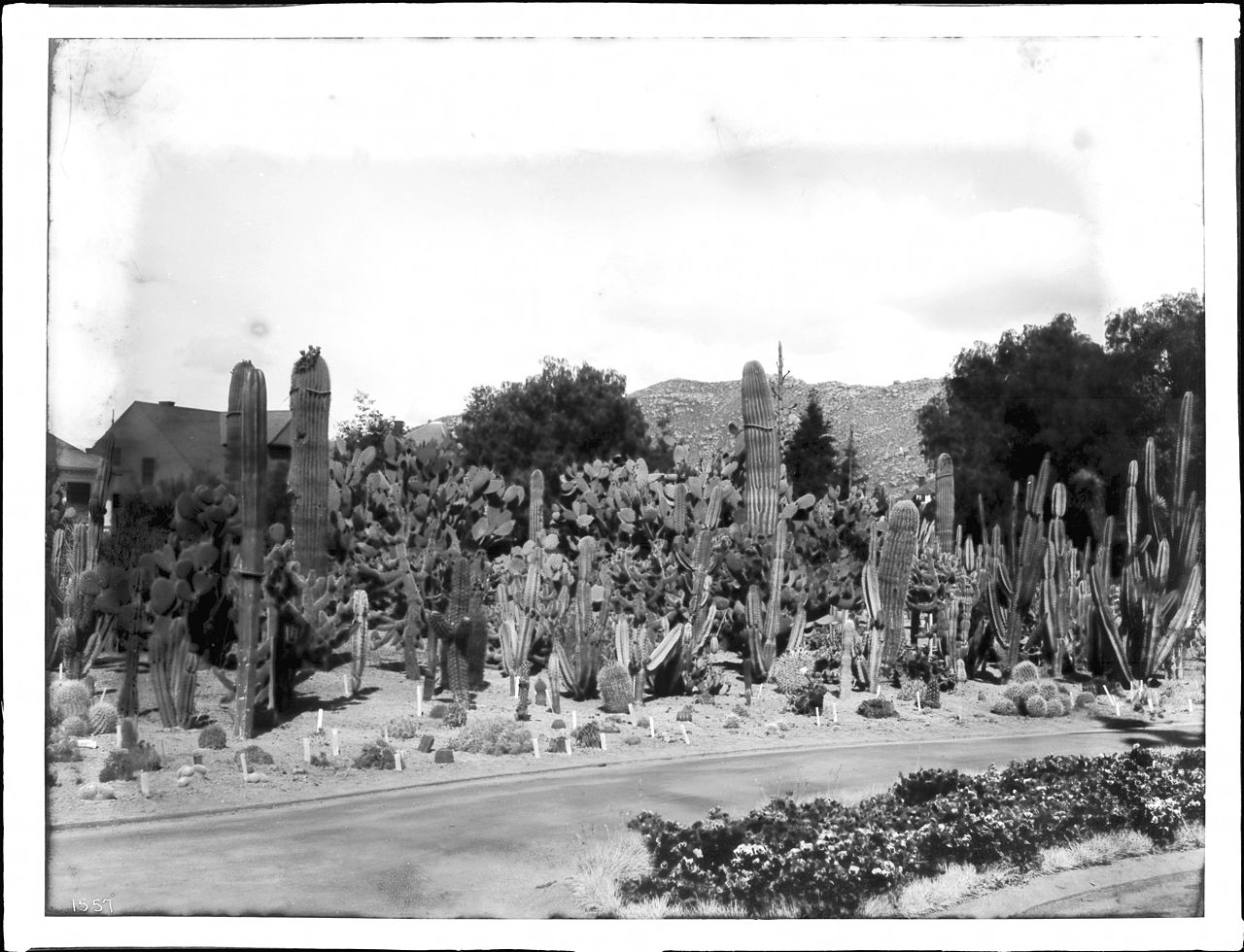 File Cactus Garden At Riverside California Ca 1920 Chs