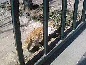 a feral cat in Beijing