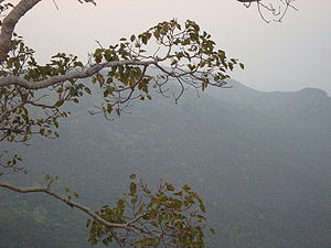 Forest near Rajgir, Bihar, India.