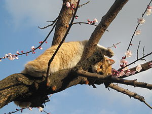 English: A cat on the tree. Italiano: Gatto su...