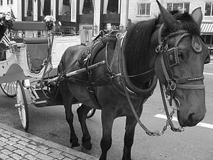 Horse Drawn Carriage outside central park
