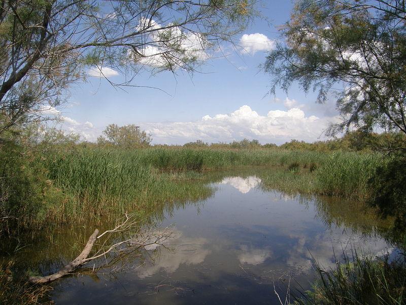 Fichier:Réserve Naturelle Régionale du Scamandre.JPG