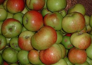 Bramley apple (cooking), British Columbia, Canada