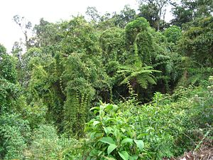 bamboo and ferns in peruvian rainforest