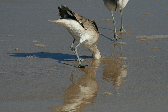 Bird with head in the sand
