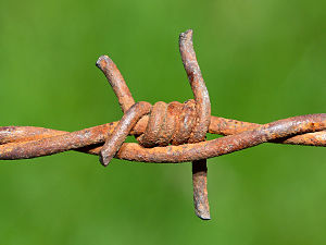 Barbed wire (rusting after years of hard work)