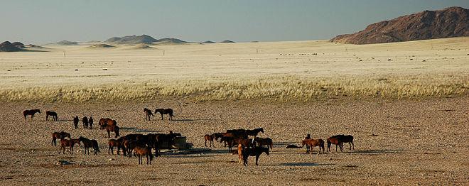 Cheval Du Namib Wikipdia