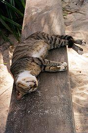 Quand le chat dort