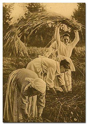 Harvesting in Finland in 1925.