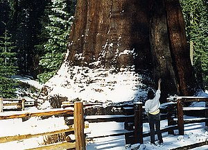 sequoia General Sherman, California, USA