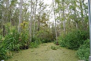 English: Honey Island Swamp, Louisiana, USA