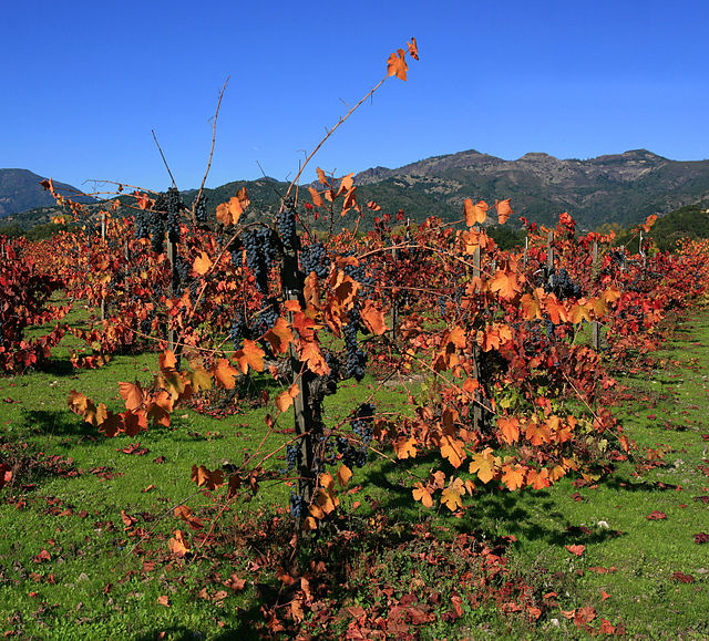 https://i2.wp.com/upload.wikimedia.org/wikipedia/commons/thumb/3/38/Vineyard_in_Napa_Valley_4_edit1.jpg/640px-Vineyard_in_Napa_Valley_4_edit1.jpg