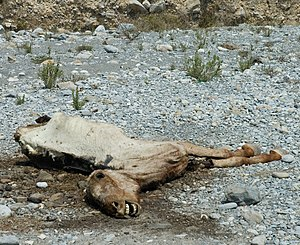 English: Dead horse in dry riverbed, Parque Na...