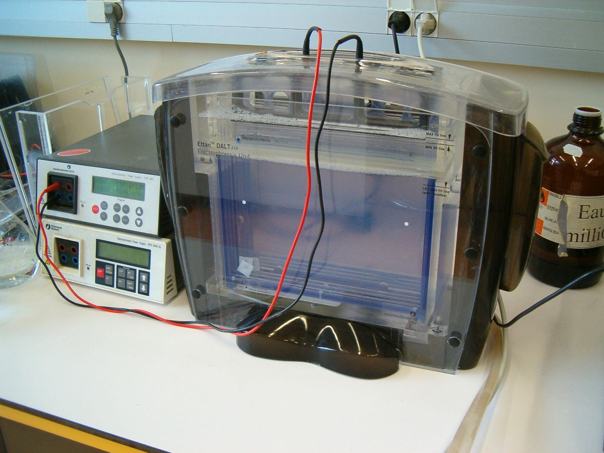 Elettroforesi Bidimensionale Wikipedia