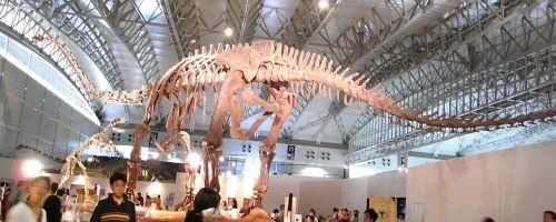 Mamenchisaurus Japan.jpg