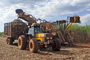 English: Sugarcane mechanized harvest operatio...