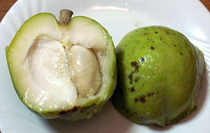 English: Casimiroa edulis, White sapote fruit ...