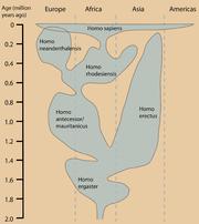 Distribución geográfica y temporal del género Homo. Otras interpretaciones difieren en la taxonom�a y distribución geográfica.