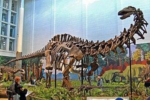 Apatosaurus Louisae, Carnegie Museum.
