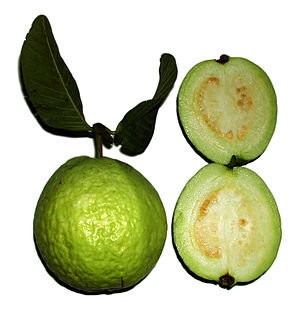 Green apple guavas are less rich in pigment an...
