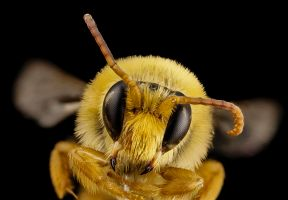 Free Beekeeping Lessons