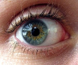 English: green-blue eyes