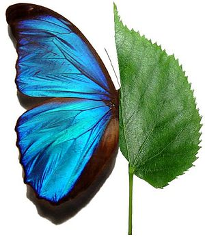 Green leaf-blue butterfly