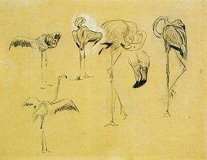 Marc Flamingos