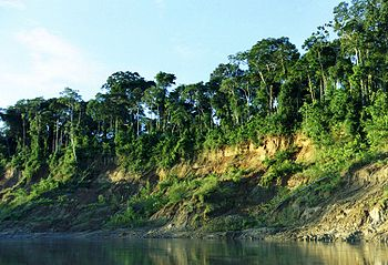 English: View of riverbank in Manu National Pa...